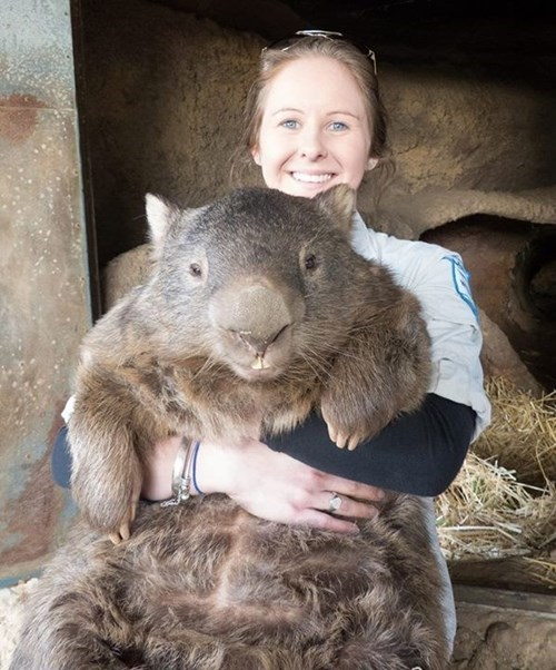 wtf Wombat sexy times virginity - 8300827392
