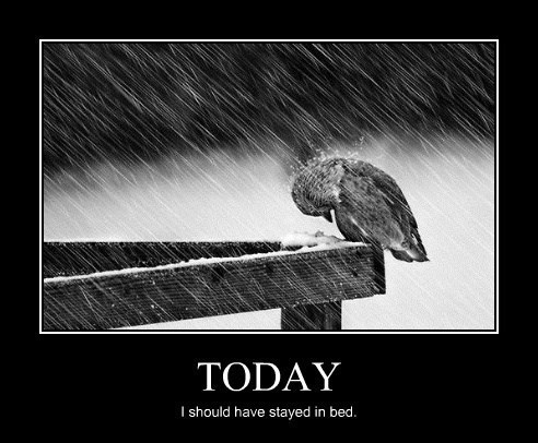 birds bad day funny - 8300851712