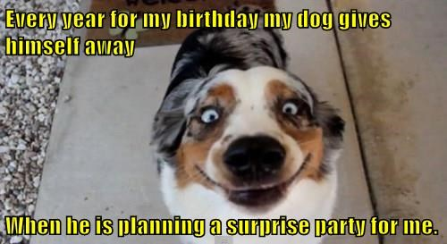 dogs surprise caption funny - 8300947200