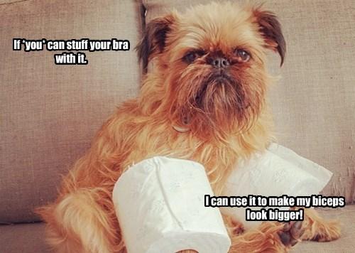 bra dogs stuff biceps caption - 8300955392