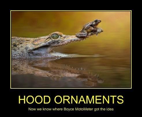 aligators funny frogs caiman - 8301386240