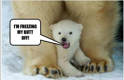 THE COLD BEAR REPORT!