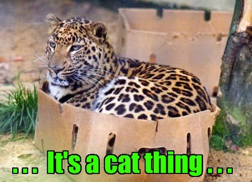. . .  It's a cat thing . . .