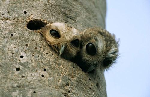 cute,owls