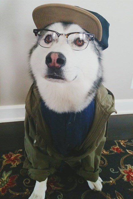 dogs,poorly dressed,glasses,cute,hat