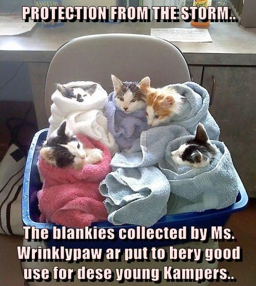 PROTECTION FROM THE STORM..  The blankies collected by Ms. Wrinklypaw ar put to bery good use for dese young Kampers..