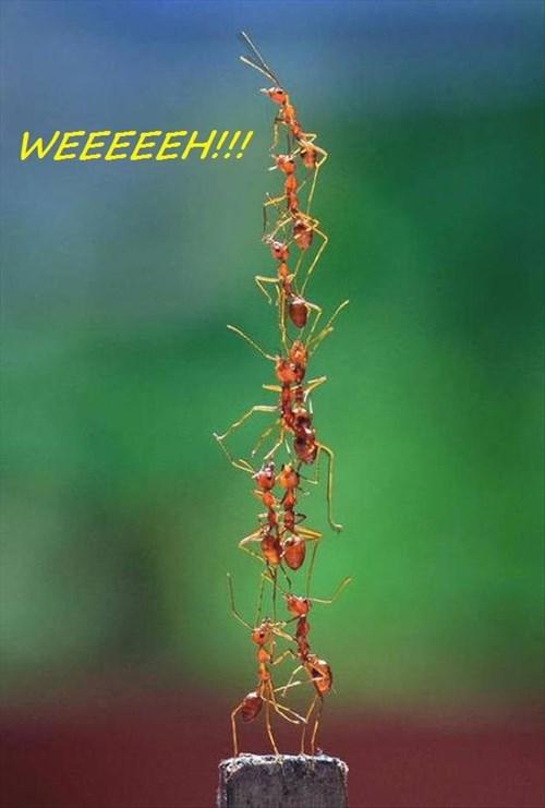 WEEEEEH!!
