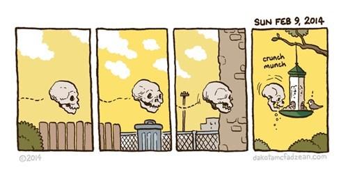 birds bird feeder skulls web comics - 8302033664