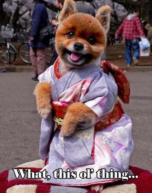 dogs,kimono,cute