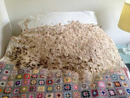 After Being Abandoned for Months, a Spare Room in This UK House Becomes a Giant Wasp's Nest
