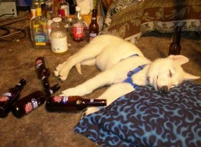 beer dogs drunk hangover funny after 12 - 8302091008