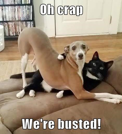 busted cat dogs caption - 8302466048