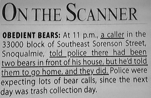 bears Probably bad News animals newspaper