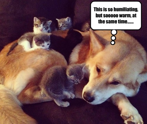 dogs kitten caption humiliating warm