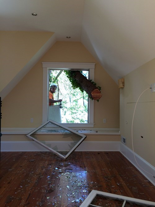 trees whoops home improvement DIY g rated fail nation