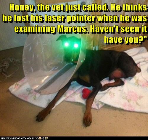 Honey, the vet just called. He thinks he lost his laser pointer when he was examining Marcus. Haven't seen it have you?""