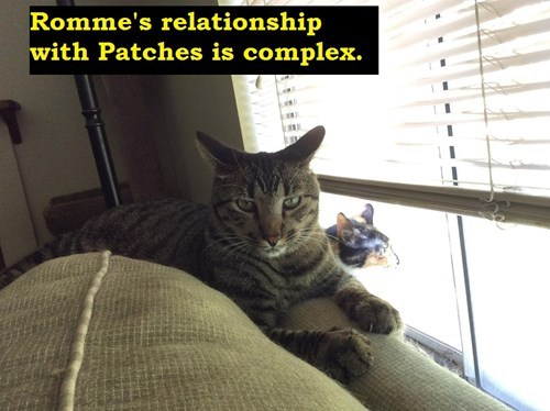 Cats hate funny love relationships - 8304313856