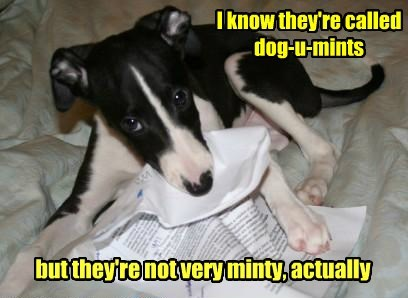 documents,dogs,mints,caption