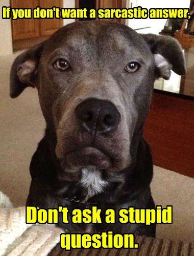 question,dogs,answer,sarcastic,stupid