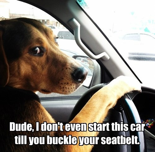 Dude, I don't even start this car till you buckle your seatbelt.