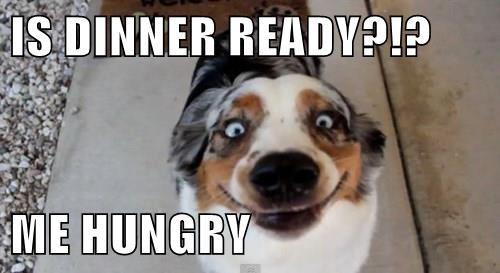 Cheezburger Image 8305511424