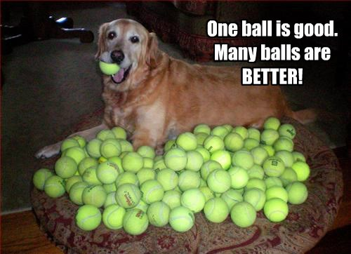 balls dogs caption funny - 8305612032