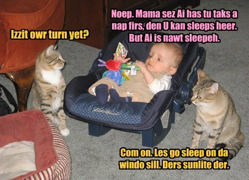 Izzit owr turn yet? Noep. Mama sez Ai has tu taks a nap firs, den U kan sleeps heer. But Ai is nawt sleepeh. Com on. Les go sleep on da windo sill. Ders sunlite der.
