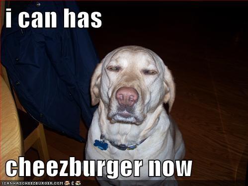 Cheezburger Image 8305840128