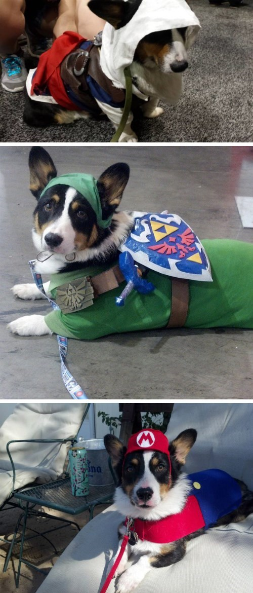 assassins creed cosplay dogs corgi link mario