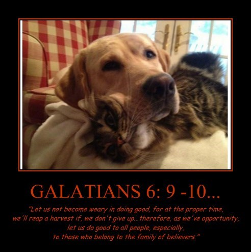 """GALATIANS 6: 9 -10... """"Let us not become weary in doing good, for at the proper time, we'll reap a harvest if, we don't give up...therefore, as we've opportunity, let us do good to all people, especially, to those who belong to the family of believers."""""""