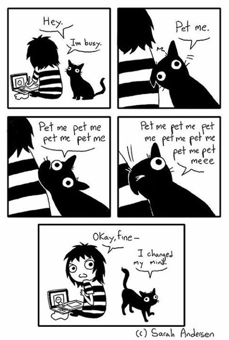 Every Time You Are Busy Not Trying to Pet Your Cat