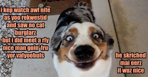 dogs ears Cat Burglar scratched caption - 8306531584