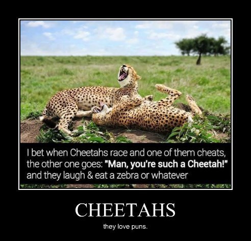 untitled folder/cheetah.jpeg