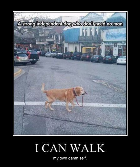 dogs funny independent walk wtf - 8306610688