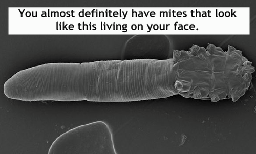 eww science mites wtf - 8306719232