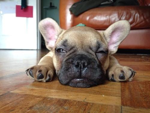 puppy-3031 cute-10393 - 8306969088