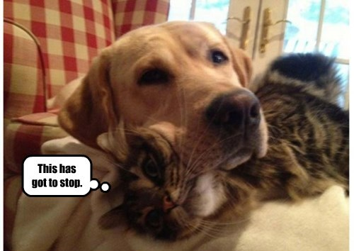 cat,dogs,caption,stop,got