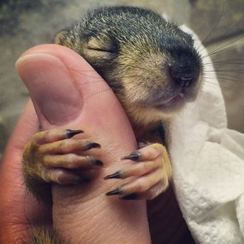 squirrels-397 cute-10394 - 8307464704