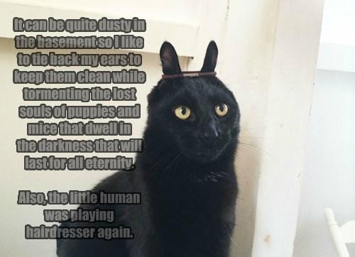 basement cat Cats - 8307540224