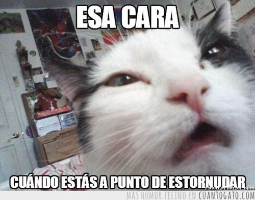 gatos bromas Memes animales - 8307606016