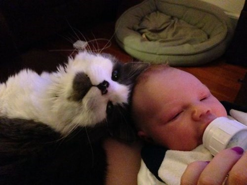 bottle baby parenting Cats - 8307686144