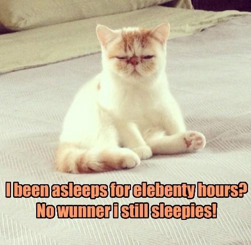 elebenty sleep Cats Cat Nap