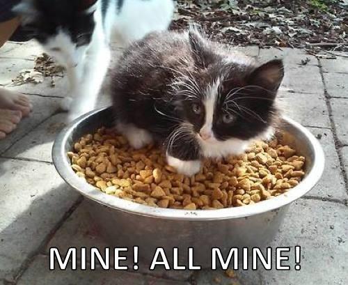 food cat food Cats - 8308312576