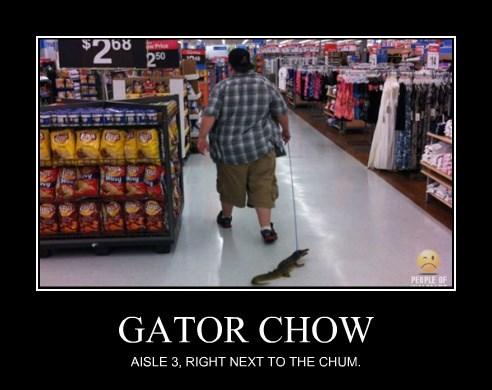 GATOR CHOW