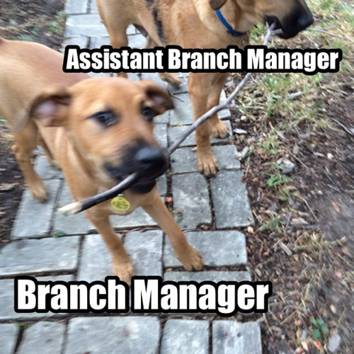 fetch dogs manager - 8308993536