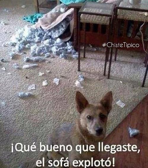 bromas perros Memes animales - 8309061888