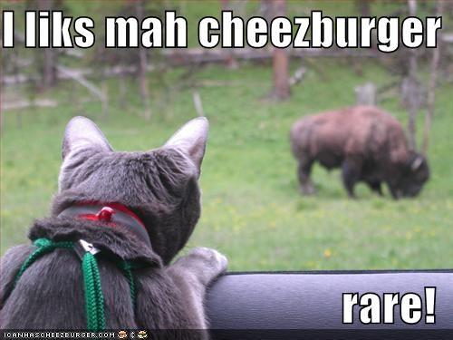 Cheezburger Image 830925568