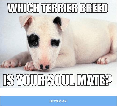 quiz terrier - 8310072320