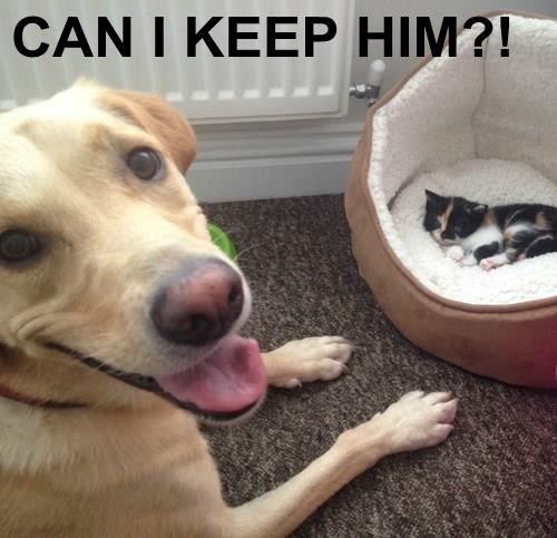dogs forbidden love Cats - 8310167040