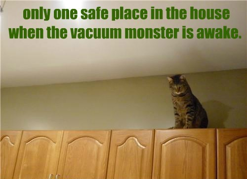 food,Cats,vacuum